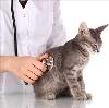 Ветеринарные клиники в Калининске